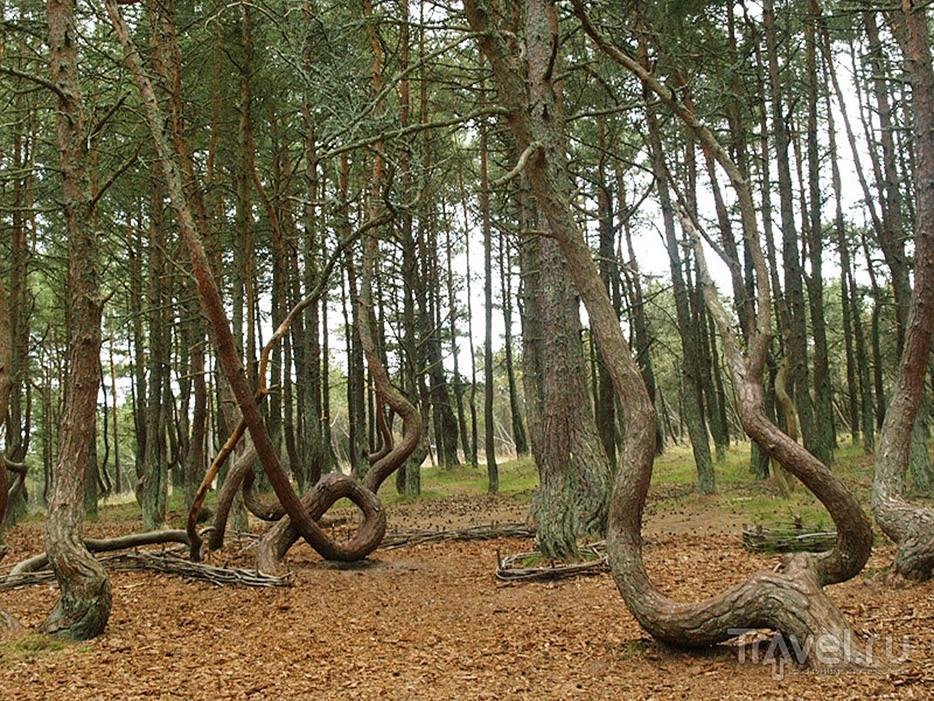 forests25 Леса с другой планеты!