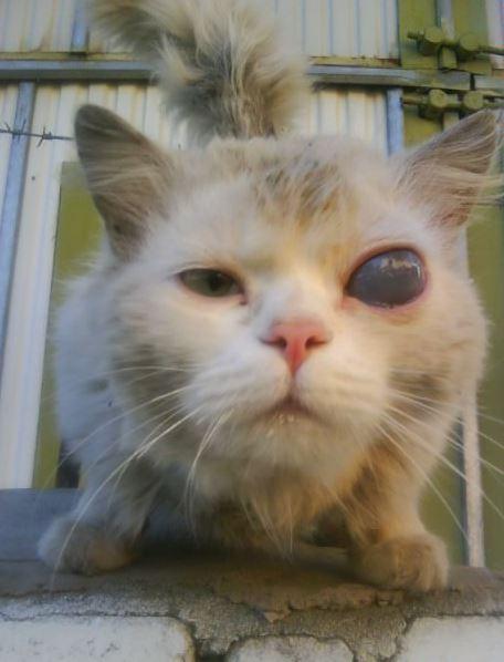 Времени ждать больше не было: оперировали дома! Дворовой котик царапался нещадно