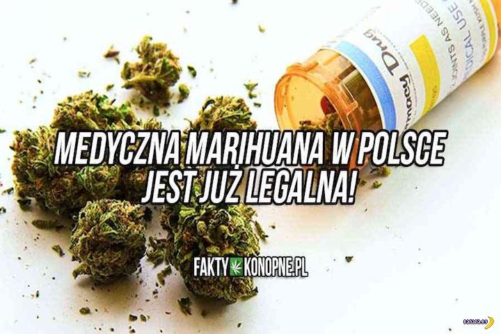 В Польше легализовали медицинскую марихуану