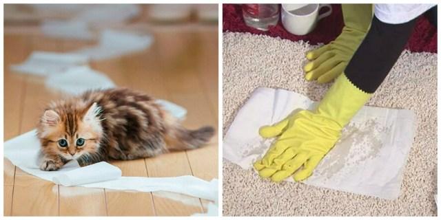 Как избавиться от запаха кошачьей мочи в квартире — актуально