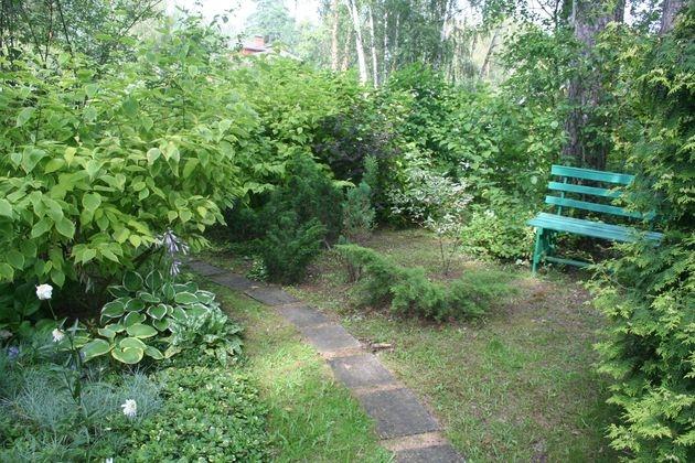 3 шага от запущенного старого сада к ухоженному