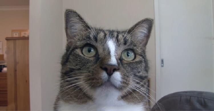 Эта кошка получила от книги рекордов Гиннесса звание самой умной кошки на свете