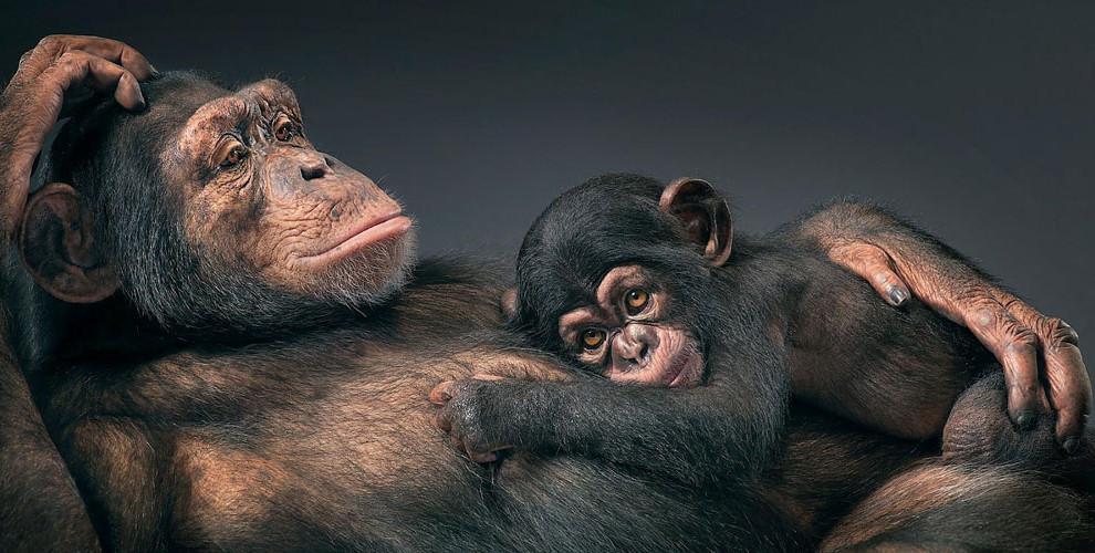 Потрясающее сходство между манерами животных и человека