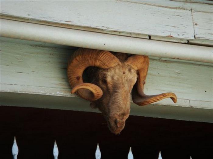 Голова убитого животного как надежный оберег. /Фото: Ларисы Аранбаевой
