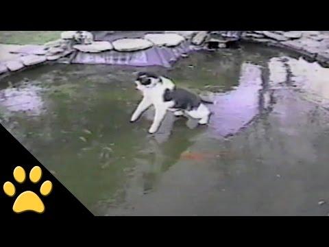 Подледная рыбалка, или Зимние развлечения кота