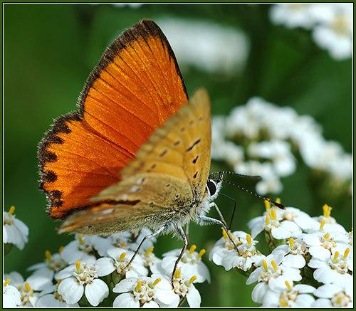 \Бабочки\
