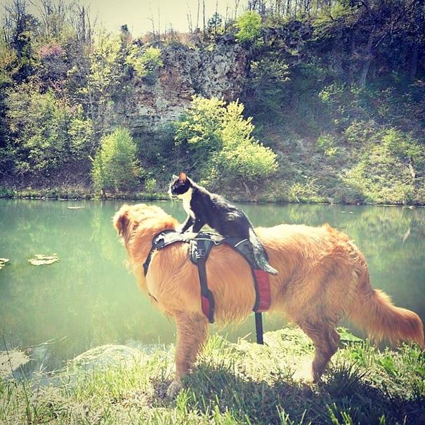 #campingwithcat, путешествие с кошкой, поход с кошкой