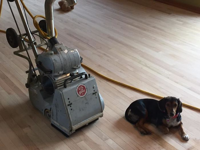 People Are Loving These Doggy Helpers That A Flooring Contractor Makes His 'Employees Of The Week'