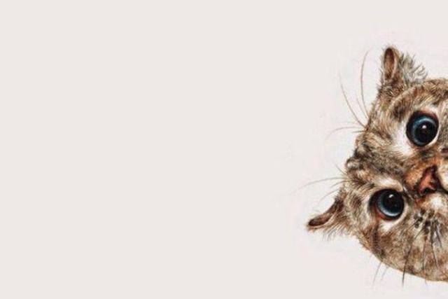 Еще одна восхитительная история про кота и его борьбу с хозяевами