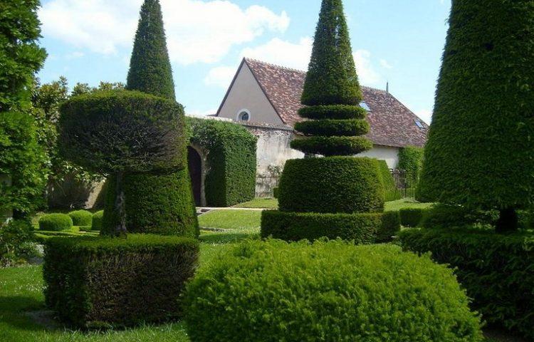 Топиарные сады: удивительные скульптуры из живых кустарников и растений