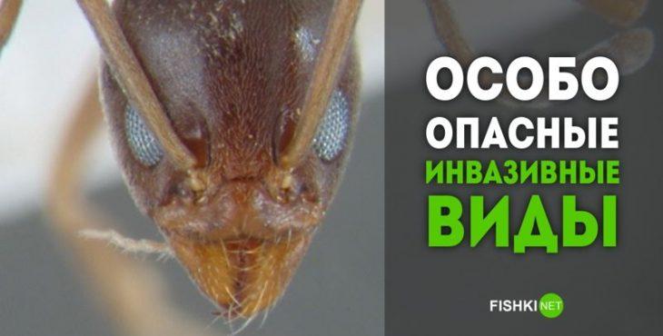 Биологическое разнообразие? Неа, не слышали! 15 самых опасных инвазивных видов животных