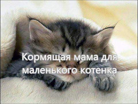 Кормящая мама для маленького котенка. Чужих детей не бывает!!!