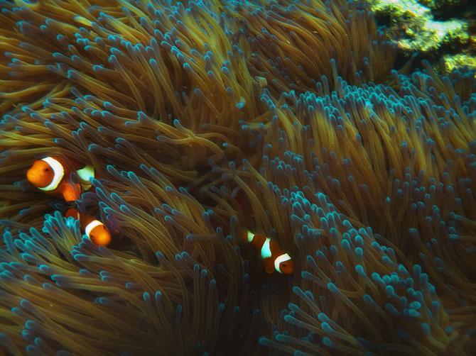Рейтинг самых удивительных коралловых рифов в мире