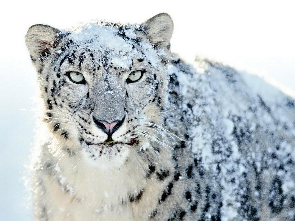 Не Только Люди Любят Снег!
