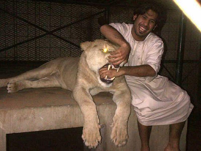 catsncars38 Хищные кошечки и дорогие машины: досуг арабского миллионера
