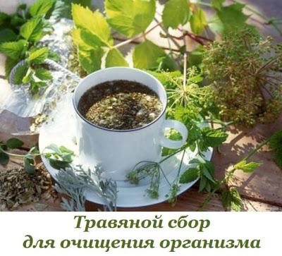 Травяной сбор для очищения организма