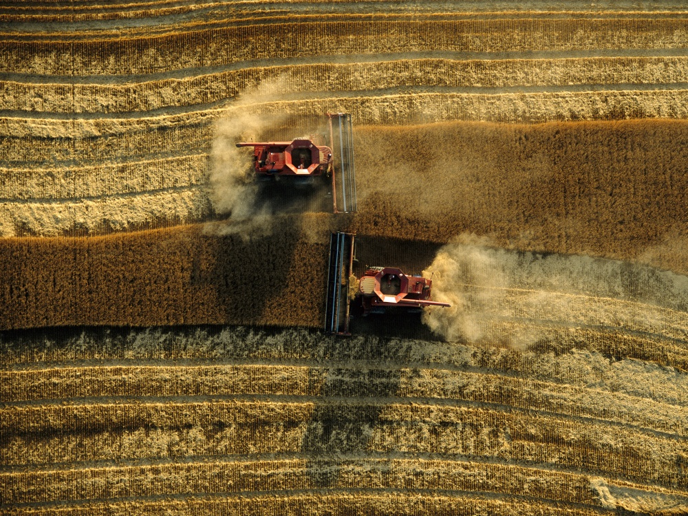 Как собирают урожай и встречают осень в разных странах мира: невероятная красота!
