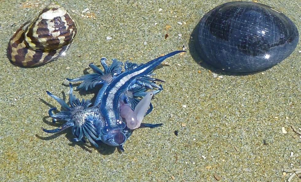 Голубой ангел: красота подводного мира