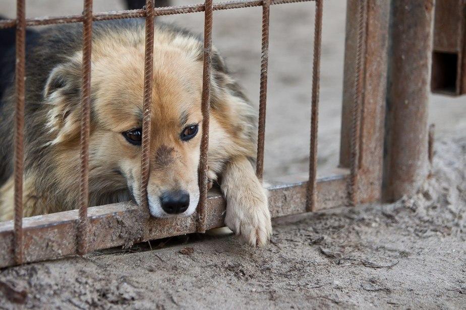 Массовые убийства животных в…