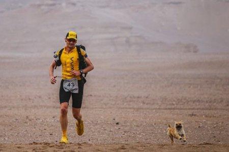 Этот пес пробежал 100 км и показал всему миру, что такое настоящая верность.