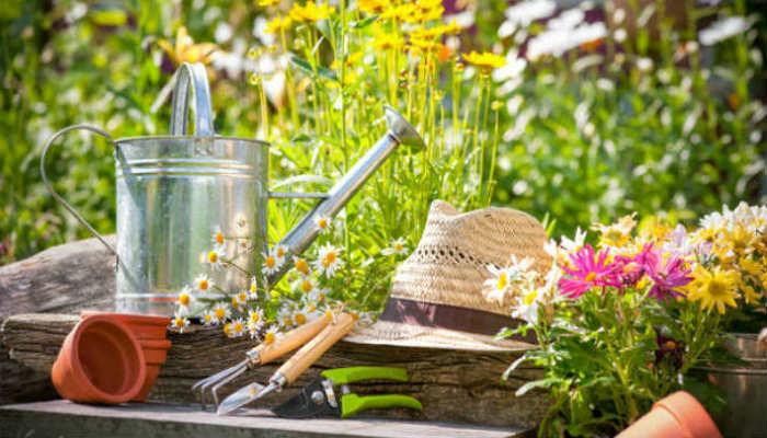 5 эффективных методов борьбы с сорняками