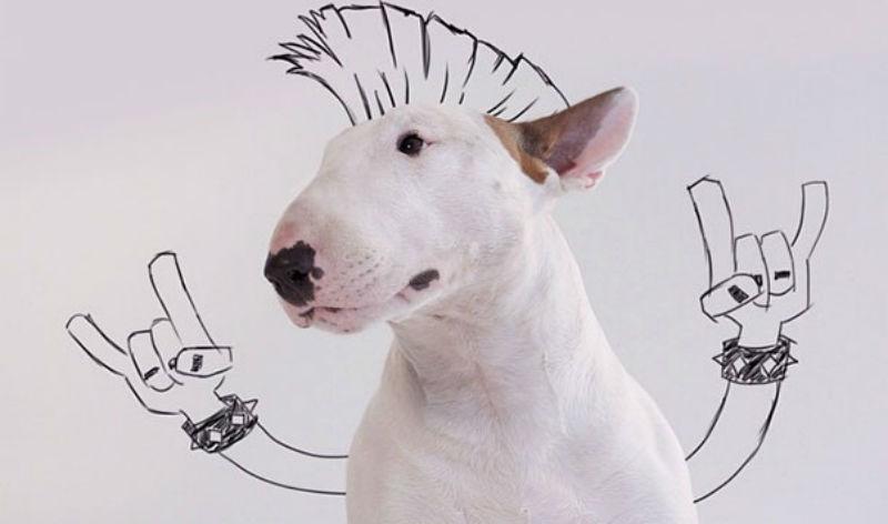 Что можно сделать при помощи собаки и маркера