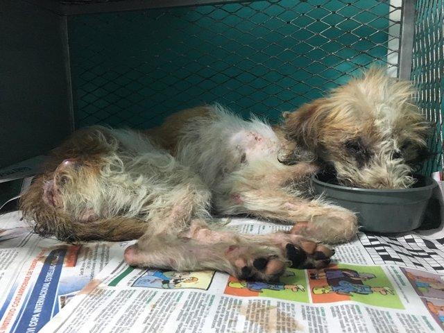 Брошенного пса, который не мог поднять головы, спас неожиданный друг!