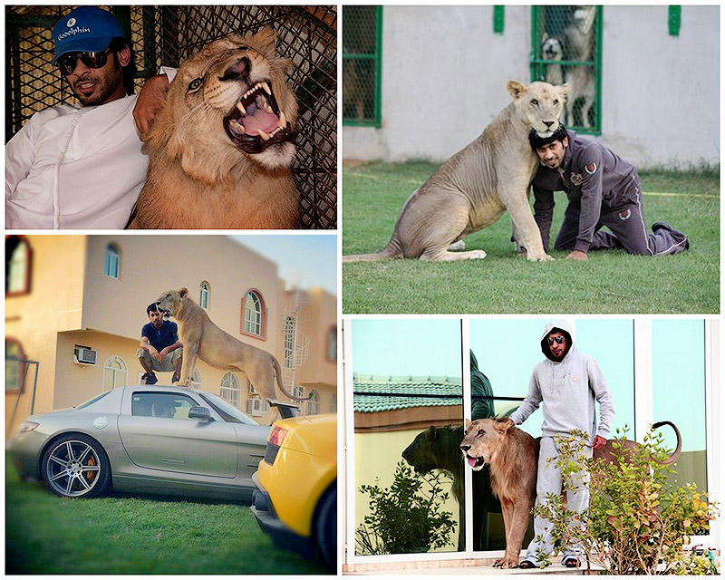 TEMP37 Хищные кошечки и дорогие машины: досуг арабского миллионера
