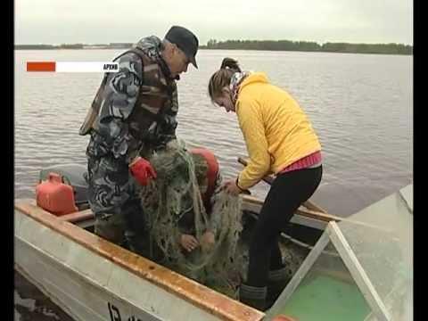 штраф за ловлю рыбы на сети