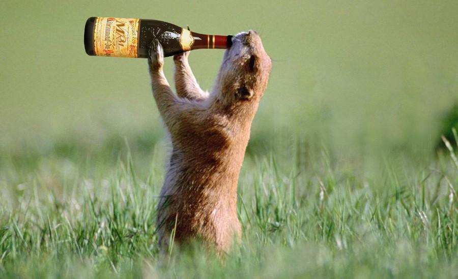 Употребляют ли животные алкоголь?  Да!