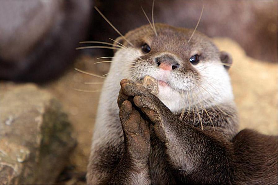 Смешные и забавные моменты из жизни животных