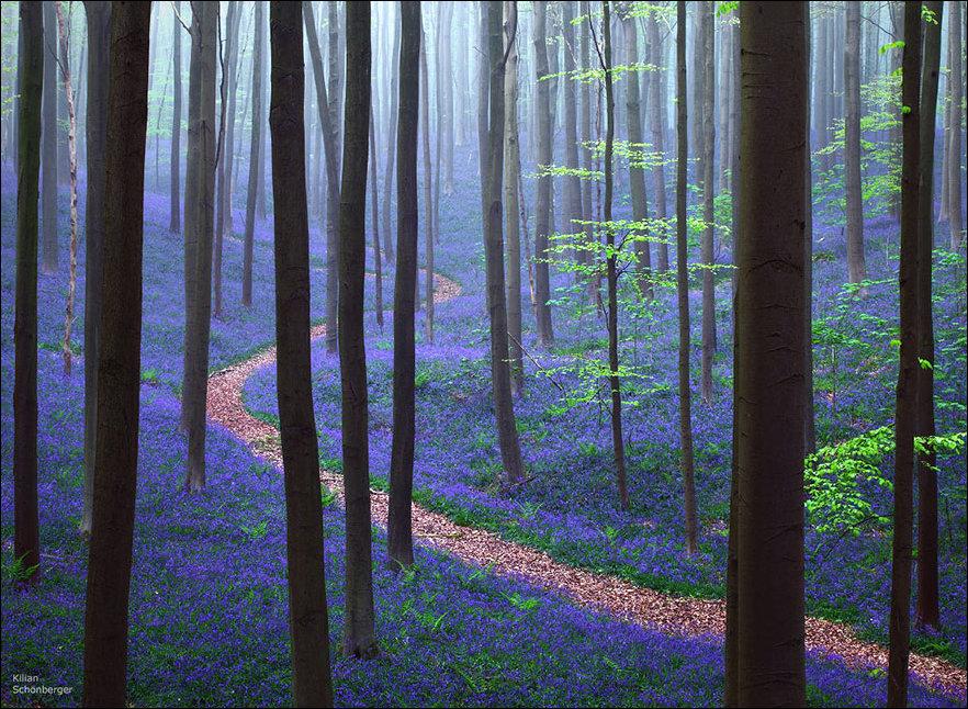 Колокольчиковый лес