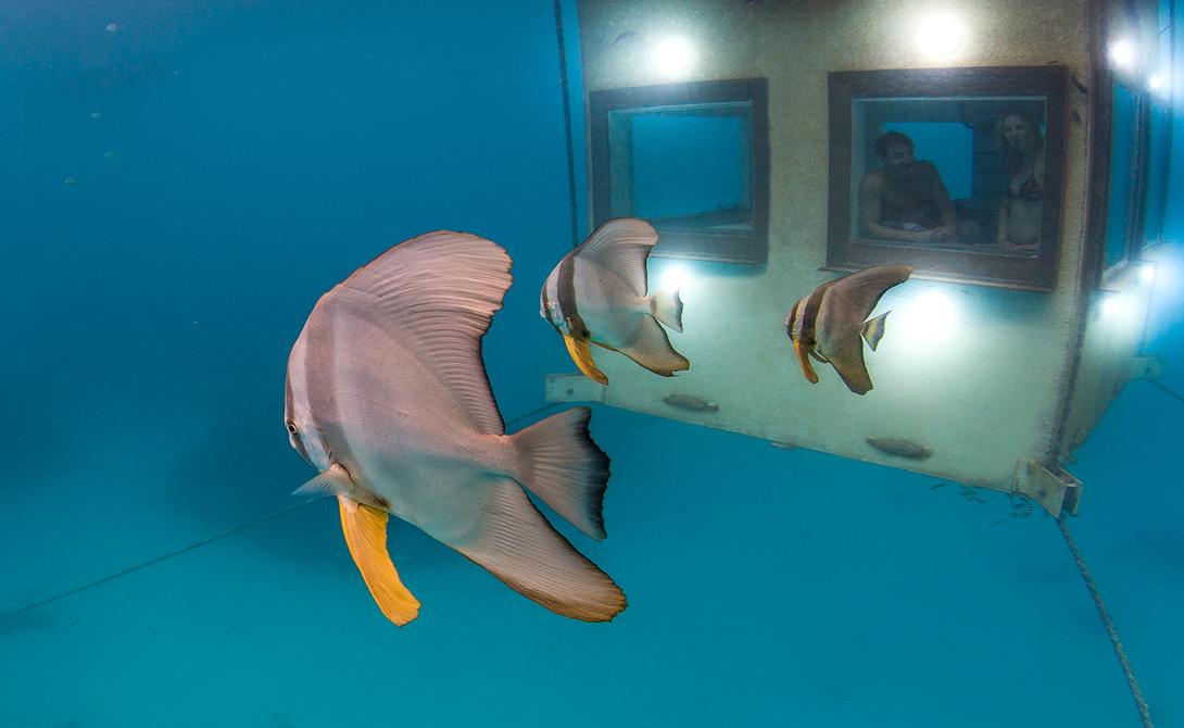 Manta Resort. 7 самых укромных курортов мира. Фото с сайта NewPix.ru