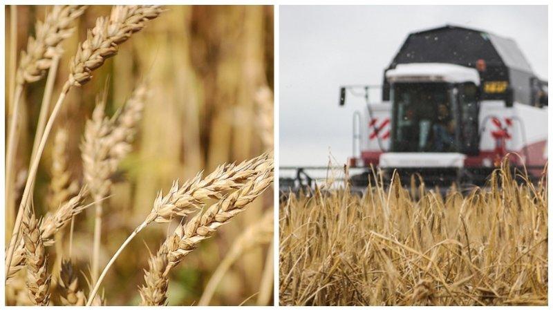Россия в 2018 году увеличила экспорт пшеницы и водки