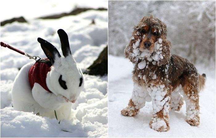 20 забавных фотографий животных, которые в первый раз увидели снег