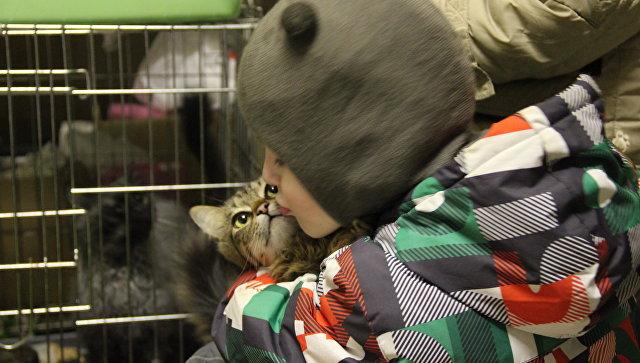 Всеми силами: в Мурманске восстанавливают разгромленный приют для животных