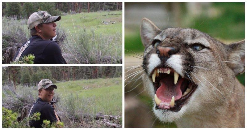 Вы когда-нибудь слышали крик пумы? Пробирает до мурашек!