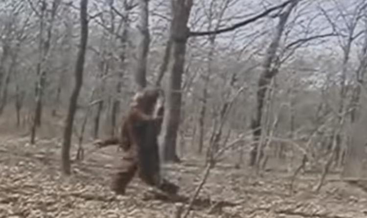 Появилось видео прогулки Снежного человека по лесу в США
