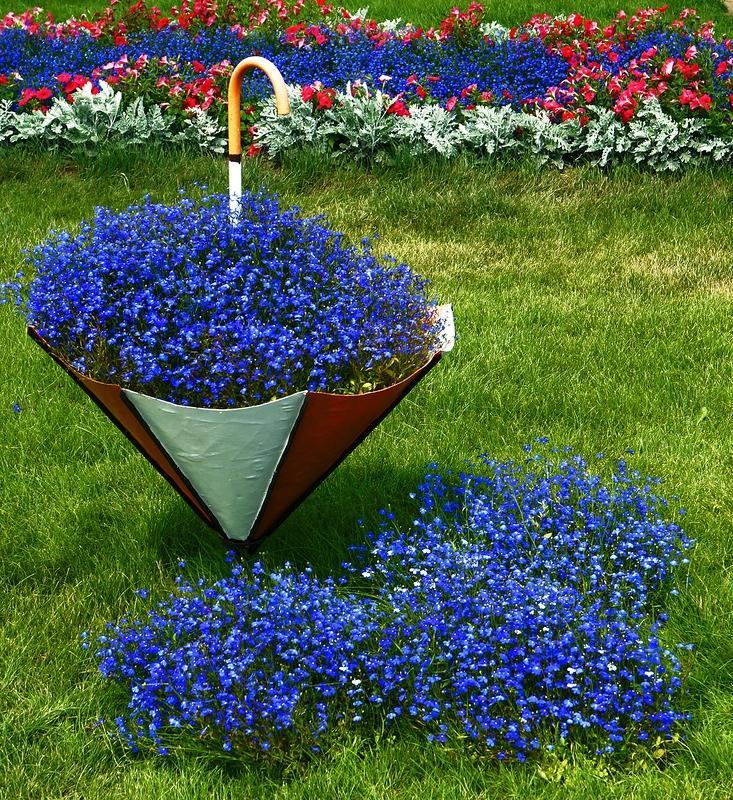 С какие цветы сажают в мае