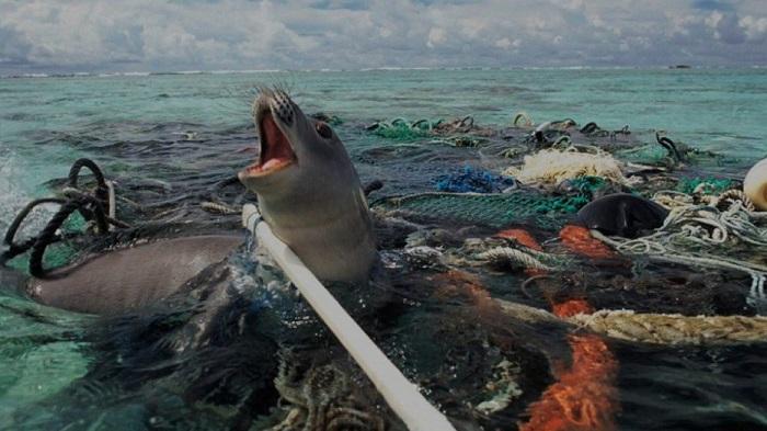 Пластиковый апокалипсис: 22 фото об ужасающих последствиях нашей глупости