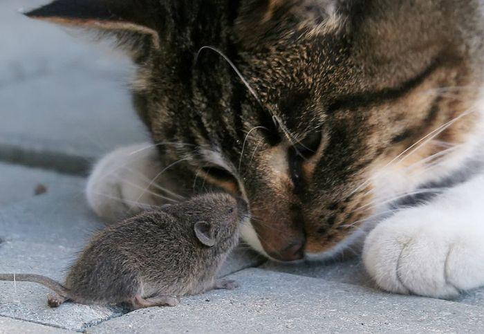 Кошки-мышки для отличного настроения!