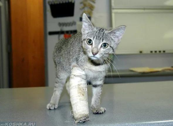 Починить кота
