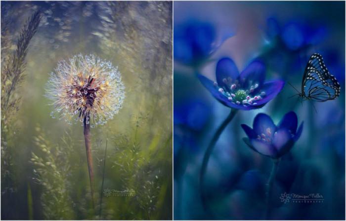 Макроснимки цветов и бабочек…
