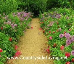 Аллиум (алиум, декоративный лук) в неформальном оформлении садовой дорожки. Знаменитый (лучший в мире?) сад Hidcote Manor, Англия