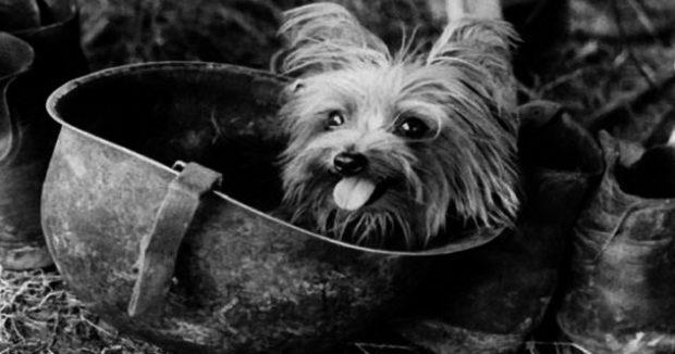 Смоки собака на войне