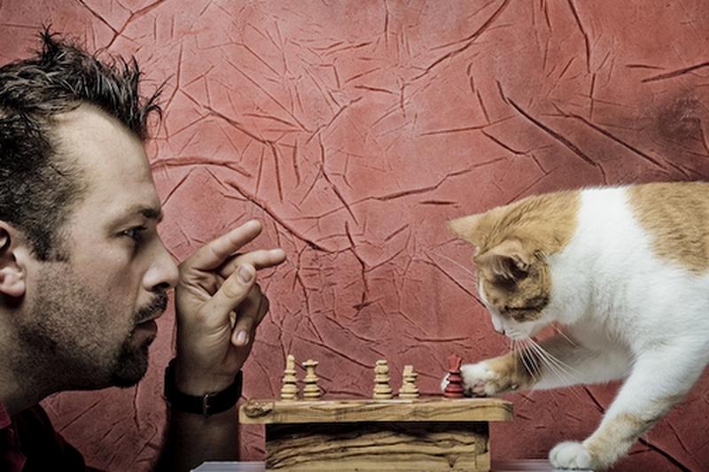 Разговоры с домашними животными свидетельствуют о высоком уровне интеллекта