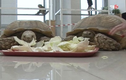 При пожаре в Татарстане погибли животные передвижного зоопарка
