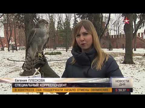 На защите Кремля стоит спецотряд тренированных птиц