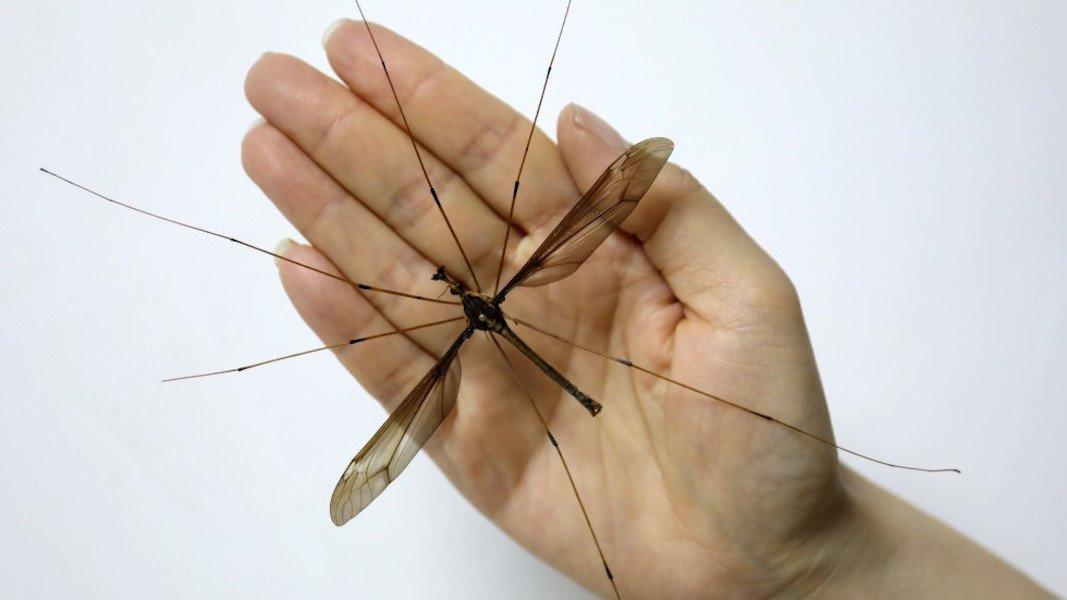 «Малярийный комар» — кошмар твоего детства