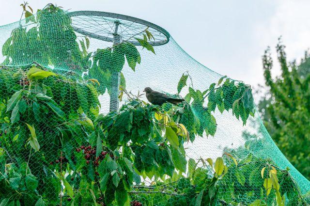 Технологии для дачника. 4 изобретения, которые улучшат ваш сад